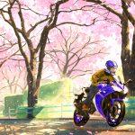 風に乗る青、みちに舞う桜